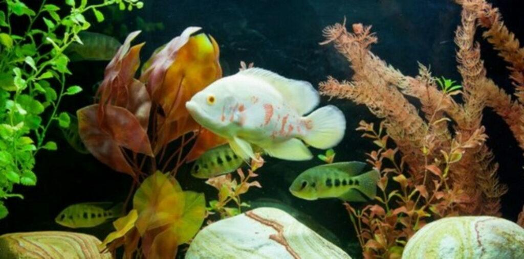 fische_im_aquarium